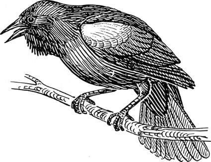Crow clipart black and white 2