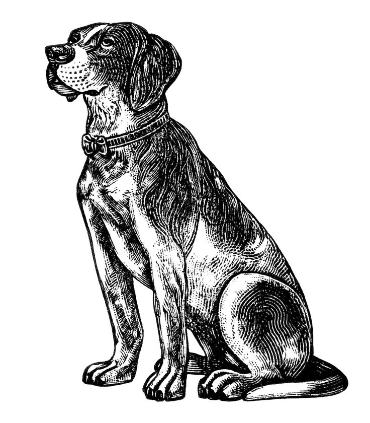 Dog  black and white 0 images about black clipart