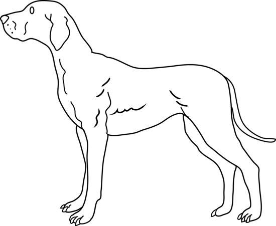 Dog  black and white white dog pictures free download clip art on
