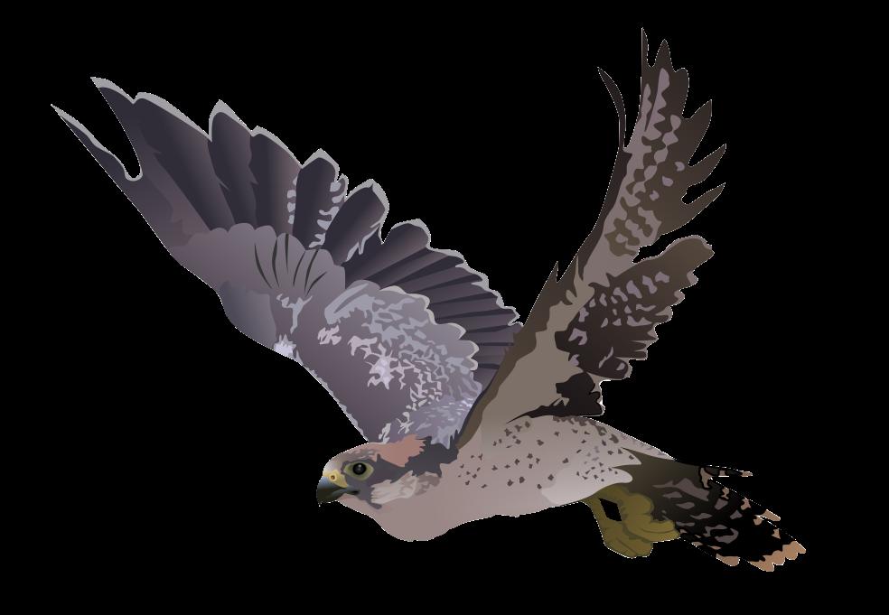 Falcon clipart 6