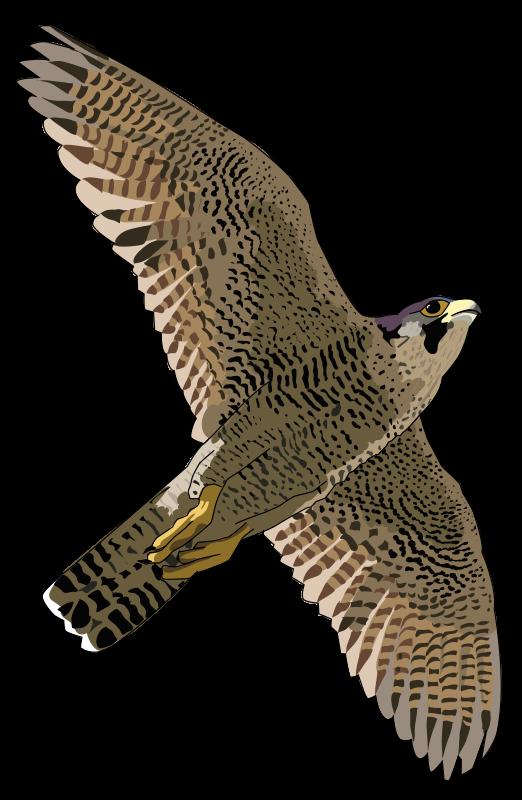 Falcon clipart 7