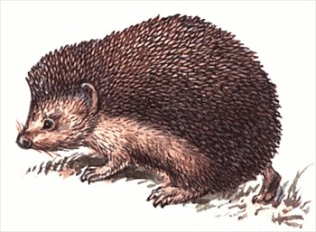 Free hedgehog clipart clipartfest