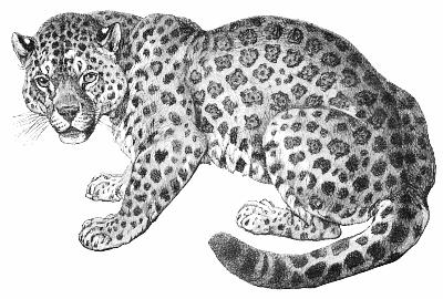 Free jaguar clipart 1 page of clip art