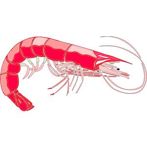 Free shrimp clipart 2