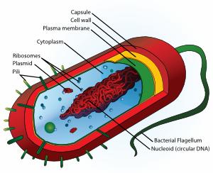 Funny bacteria clip art art download vector clip - WikiClipArt