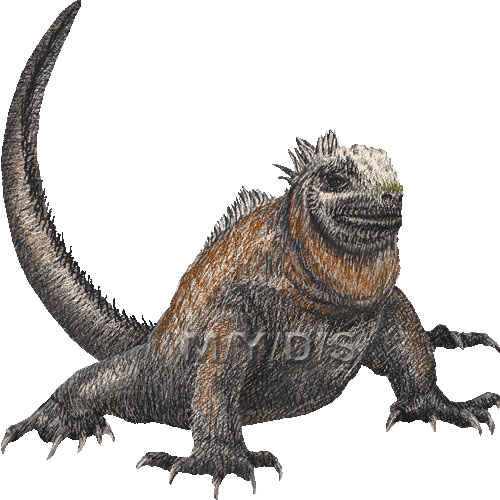 Iguanas clipart 20 free Cliparts  Download images on