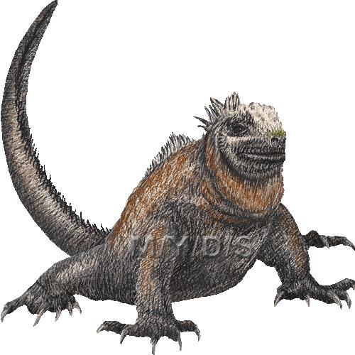 Galapagos marine iguana clipart graphics free clip art