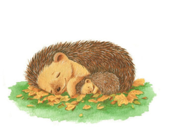 Hedgehog clipart free images 8