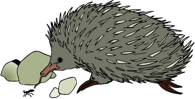 Hedgehog clipart the cliparts