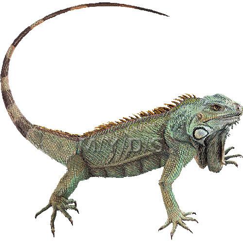 Iguana clip art free clipart images