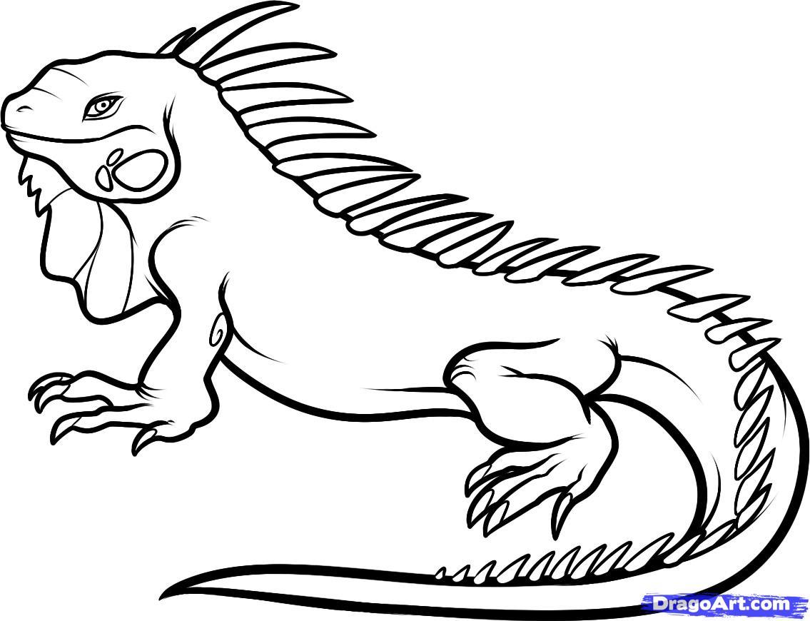 Iguana clipart 12
