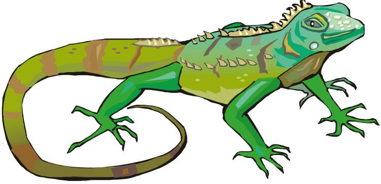 Iguana clipart 4