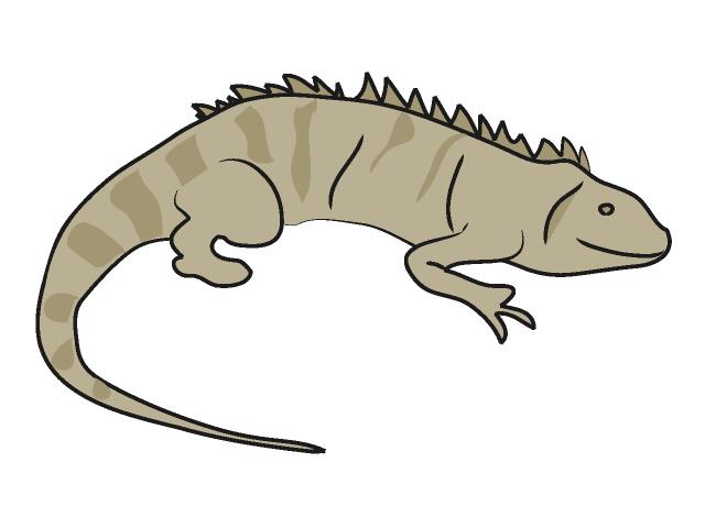Iguana clipart 6
