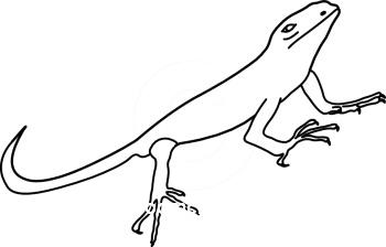 Iguana clipart free images 2