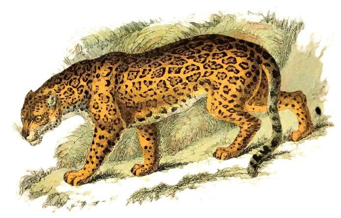 Jaguar clip art download 2