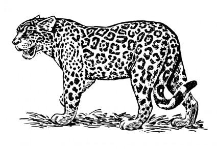 Jaguar clip art download 4