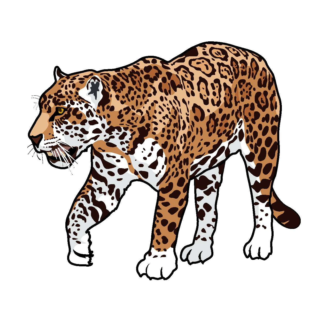 Jaguar clip art tumundografico 2