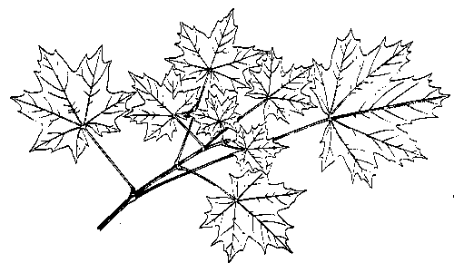 Leaf  black and white september leaves clipart black and white clipartfest