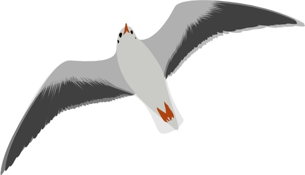 Sea gull seagull clip art free vector in open office drawing svg