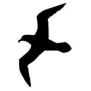 Seagull 9i4l7kxxt clip art