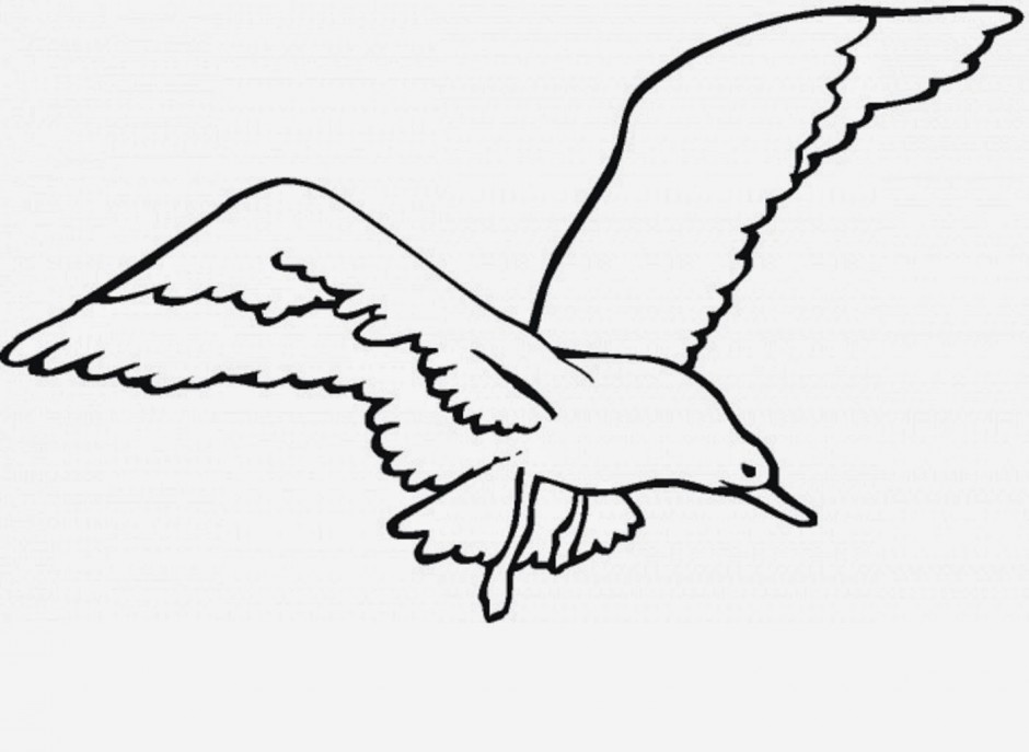 Seagull animals clipart of outline with the keywords
