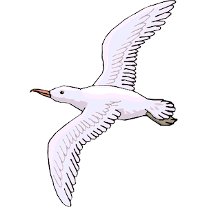 Seagull clip art clipart free download