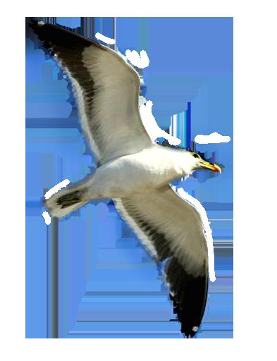 Seagull clip art image famclipart 2