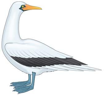 Seagull clip art vector graphics 2