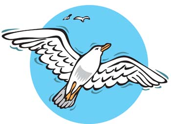 Seagull clip art vector graphics