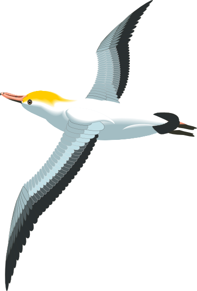 Seagull clipart free clipartfest 3
