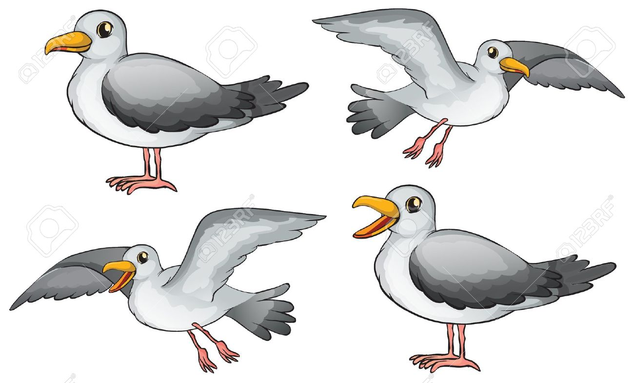 Seagull clipart free clipartfest 4