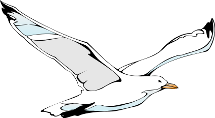 Seagull clipart free images 2
