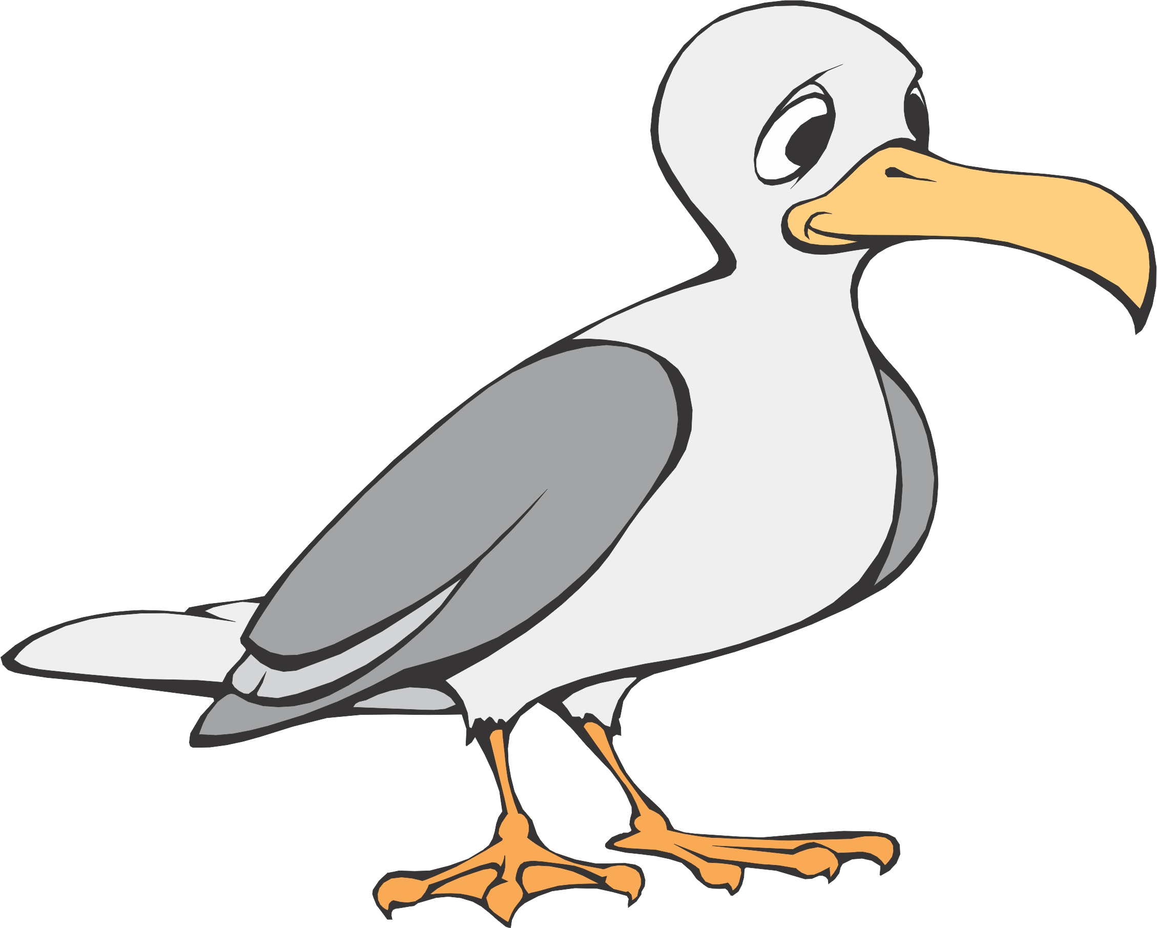 Seagull clipart free images 3