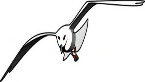 Seagull clipart free to use clip art resource 2