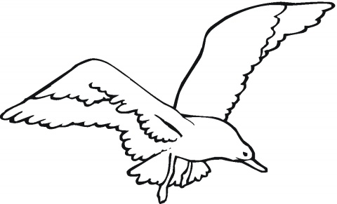 Seagull outline free download clip art on