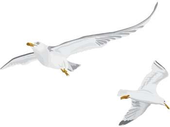 Seagull vector 6 free animals vectors deluxevectors clipart