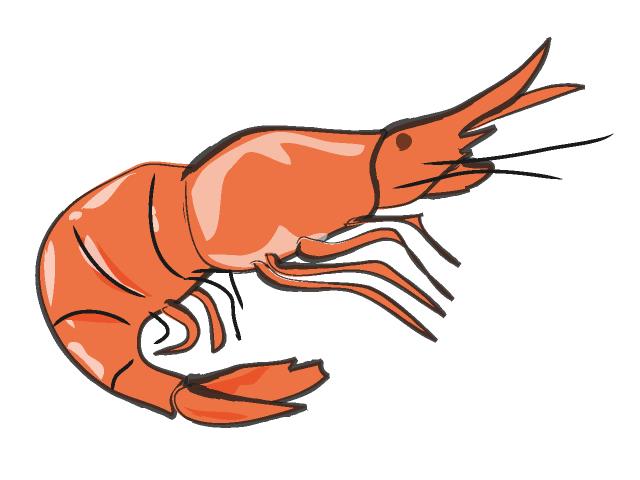 Shrimp clip art tumundografico 2