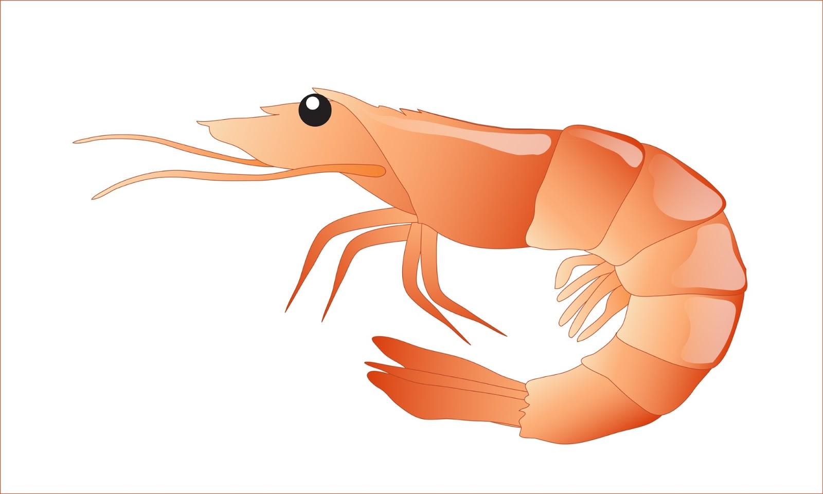 Shrimp clip art tumundografico
