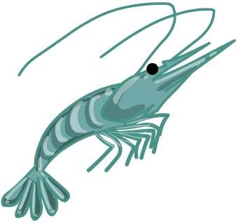 Shrimp clip art