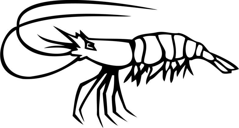 Shrimp clipart 2