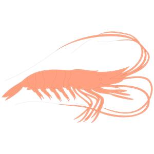 Shrimp clipart 4