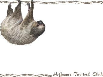 Sloth hoffman clip art