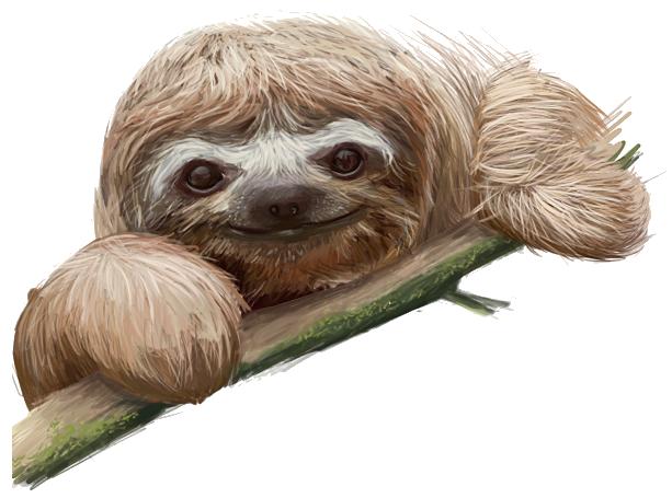 Sloth transparent images all clip art