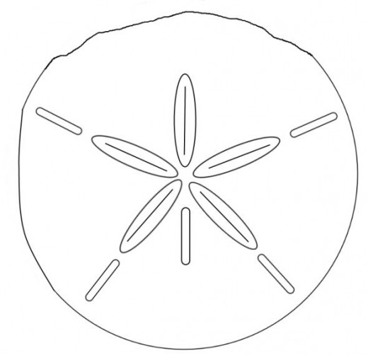 0 images about sand dollars on clipart