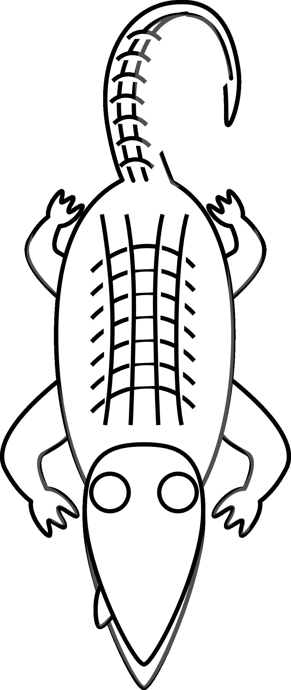Alligator  black and white alligator clipart black and white free