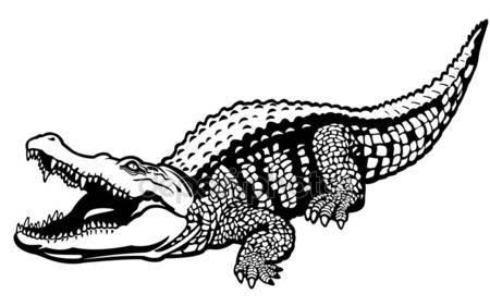 Alligator  black and white crocodile stock vectors free illustrations clip art