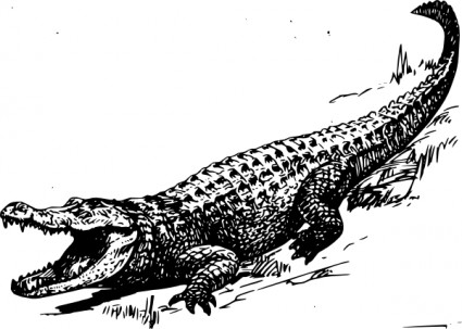 Alligator  black and white cute alligator clipart black and white gallery 3