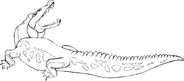 Alligator  black and white free alligator graphics animated alligators clipart