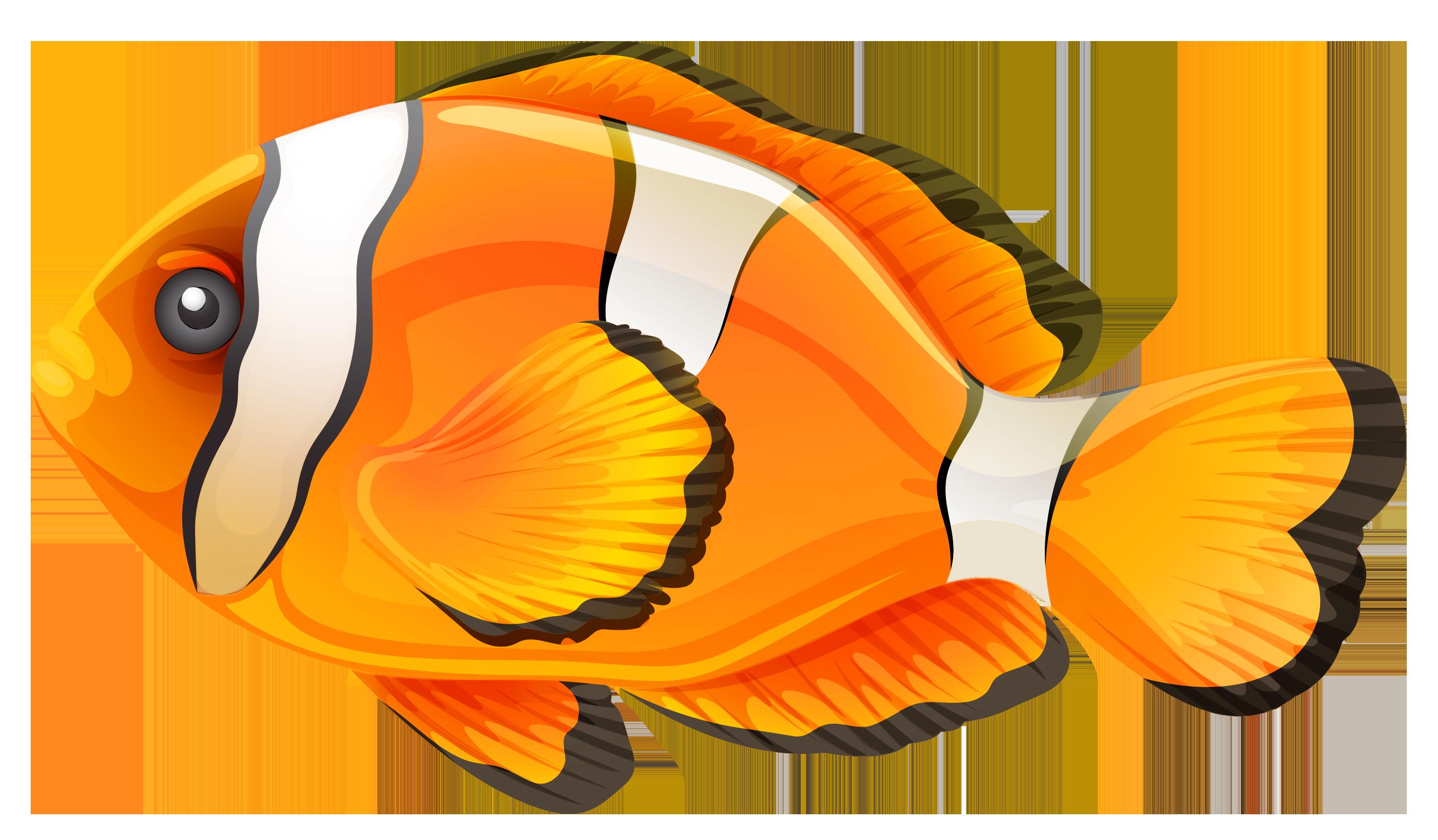 Clownfish clipart web