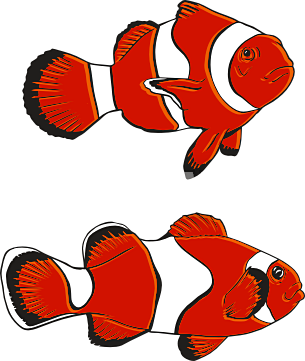 Clownfish two fish clipart clipartfest